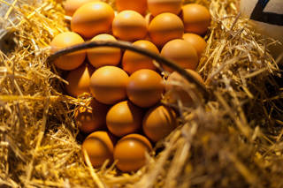 Haier's quest for the perfect egg