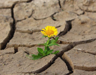 Building resilience: from fear to growth